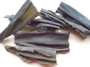 algi-kombu